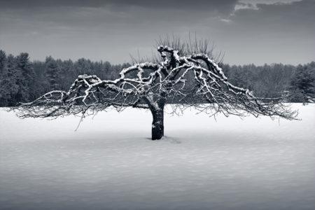 tree-450x300.jpg